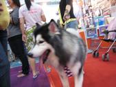 2008.07.27 台中寵物嘉年華:IMG_2004