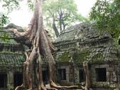 2011.04.09 in柬埔寨-吳哥窟:01-016-吳哥窟-塔普倫寺-像被蛇纏繞的榕樹.JPG
