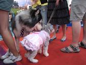 2008.07.27 台中寵物嘉年華:IMG_2005