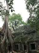 2011.04.09 in柬埔寨-吳哥窟:01-017-吳哥窟-塔普倫寺-像被蛇纏繞的榕樹.JPG