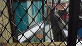 金仙捲飯何男侵入住宅傷害及延平北路5段163巷林男等惡鄰侵害相關照片:陳女與表姊為隔壁戶'此為他2樓陽台的全貌