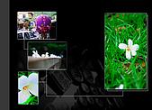 090419 三義油桐花在哪裡?:002.jpg