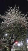 日本京阪神賞櫻:j018.jpg
