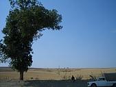Tunisia-Tabarka(jazz concert):偌大農地與貨車