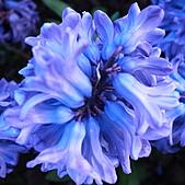 花花世界:私房花現-藍,風捎來的信。