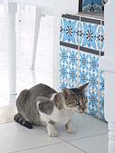 Tunisia-Hammamet:貓貓又出現啦