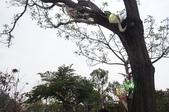 2014.02.12_月津港燈會:DSC09502.JPG