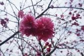 2014.02.02_劍湖山賞花:DSC08939.JPG