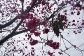 2014.02.02_劍湖山賞花:DSC08940.JPG