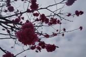 2014.02.02_劍湖山賞花:DSC08943.JPG