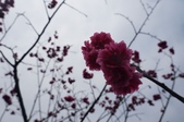 2014.02.09_姑姑出遊行-廟宇:DSC09145.JPG
