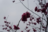 2014.02.09_姑姑出遊行-廟宇:DSC09146.JPG