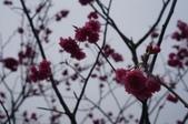 2014.02.09_姑姑出遊行-廟宇:DSC09147.JPG