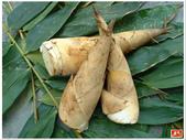 蔬菜-麻竹筍:麻竹筍.JPG