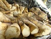 蔬菜-麻竹筍:麻竹筍DSC00377.JPG