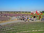 仙草花節:PC010058.JPG