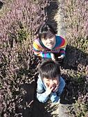 仙草花節:PC010042.JPG