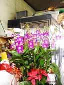 石斛蘭盆栽組合:_20131025石斛蘭組合 (9).jpg