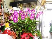 石斛蘭盆栽組合:_20131025石斛蘭組合 (8).jpg