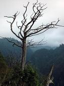 台灣之美:枯樹.jpg