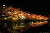 日本北關東東北行-8弘前城-櫻花紅葉園區驚豔楓紅.....:A81Q0685.JPG