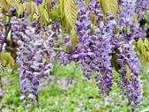 紫藤咖啡園-淡水二店:20210322_134322-uid-957C5273-49FC-4008-BCA0-6512CFCA2CB0-3324519.jpg