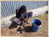 4.東非獵奇行-肯亞-納庫魯湖國家公園:DSC09271肯亞_往納庫魯湖國家公園LAKE NAKURU NATIONAL PARK途中休