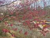 日本關西賞櫻深度之旅-鳥取花迴廊42-8:IMG_2312.JPG