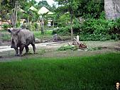15-5-峇里島-Safari Marine Park野生動物園:IMG_6555峇里島-Safari Marine Park野生動物園.jpg