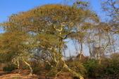 南部非洲32天探索之旅-馬拉威MALAW 6-5-5里旺國家公園狩獵巡禮:IMG_1865.JPG