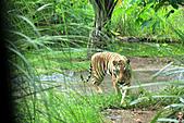 15-5-峇里島-Safari Marine Park野生動物園:IMG_1110峇里島-Safari Marine Park野生動物園.jpg