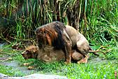 15-5-峇里島-Safari Marine Park野生動物園:IMG_1229峇里島-Safari Marine Park野生動物園.jpg