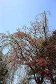 日本12天賞紫藤....VIP團之旅34-29角館-武家屋敷園區:A81Q7723.JPG