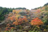 日本四國人文藝術+楓紅深度之旅-別府峽楓葉散策53-23:A81Q0017.JPG