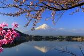 日本12天賞紫藤...VIP團之旅34-2 富士山我看清楚了你...:A81Q6206.JPG