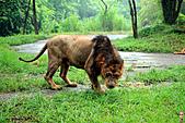 15-5-峇里島-Safari Marine Park野生動物園:IMG_1254峇里島-Safari Marine Park野生動物園.jpg