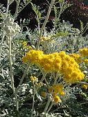 塞爾維亞SERBIA_貝爾格勒BELGRADE采風:DSC01274塞爾維亞_貝爾格勒BELGRADE_花卉.jpg