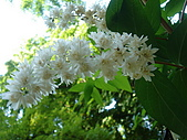 塞爾維亞SERBIA_貝爾格勒BELGRADE采風:DSC01306塞爾維亞_貝爾格勒BELGRADE_花卉.jpg