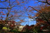 日本四國人文藝術+楓紅深度之旅-小豆島橄欖公園53-36:A81Q0328.JPG