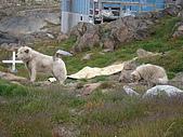 格陵蘭島的采風-GREENLAND:DSC00496格陵蘭島GREENLAND-KULUSUK.JPG