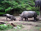 15-5-峇里島-Safari Marine Park野生動物園:IMG_6556峇里島-Safari Marine Park野生動物園.jpg