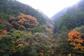 日本四國人文藝術+楓紅深度之旅-別府峽楓葉散策53-23:A81Q0011.JPG