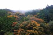 日本四國人文藝術+楓紅深度之旅-別府峽楓葉散策53-23:A81Q0013.JPG