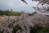 日本九州春櫻尊爵全覽之旅-1_福岡市舞鶴公園-綻放春櫻:A81Q5662.JPG