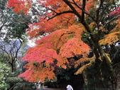 日本四國人文藝術+楓紅深度之旅-金刀比羅宮楓紅盛開秘境 53-33:IMG_6378.JPG