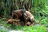 15-5-峇里島-Safari Marine Park野生動物園:IMG_1230峇里島-Safari Marine Park野生動物園.jpg