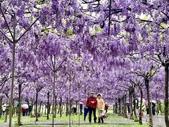 紫藤咖啡園-淡水二店:20210322_184420-uid-74BF04BA-9D0C-41A5-AFC6-1EDB1D20EFF4-1067873.jpg