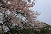 日本九州春櫻尊爵全覽之旅-1_福岡市舞鶴公園-綻放春櫻:A81Q5741.JPG