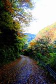 日本四國人文藝術+楓紅深度之旅-別府峽楓葉散策53-23:A81Q0050.JPG