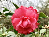 春節參拜走春-廟宇之美:IMG_4229.JPG